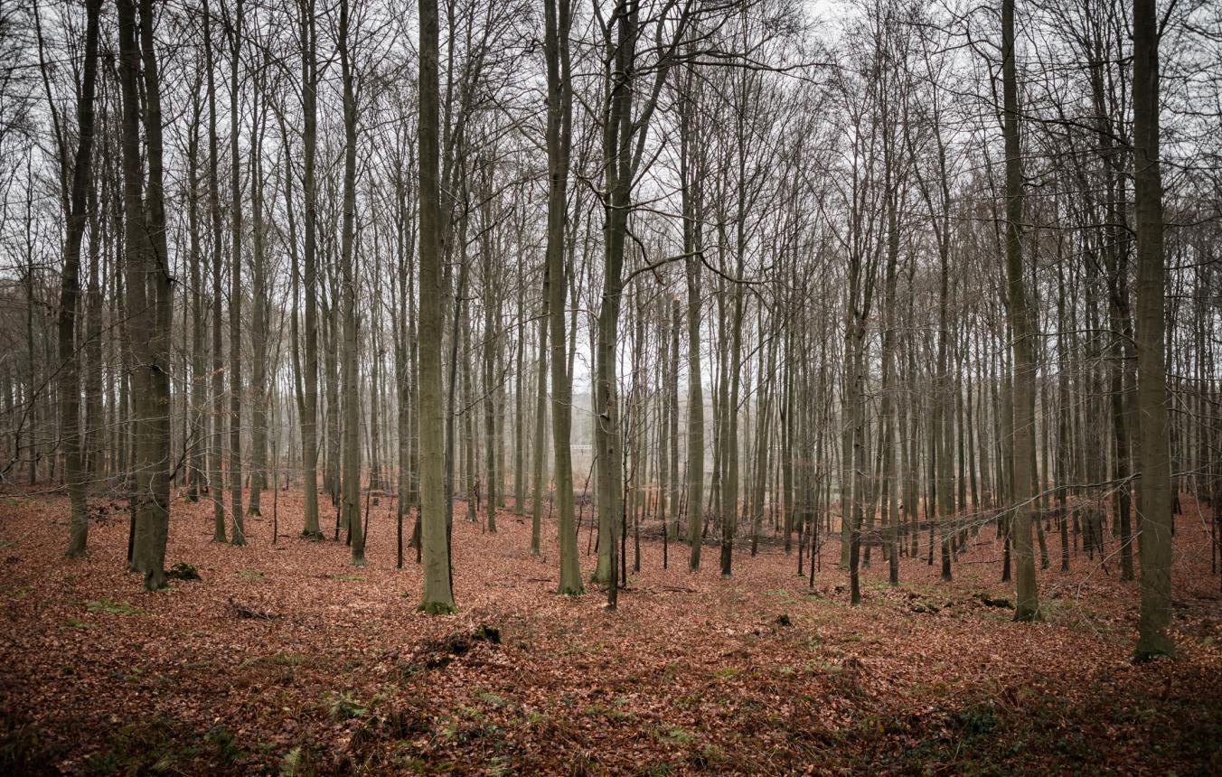Sitefoto's OO3706 Canopy Walk Hoeilaart